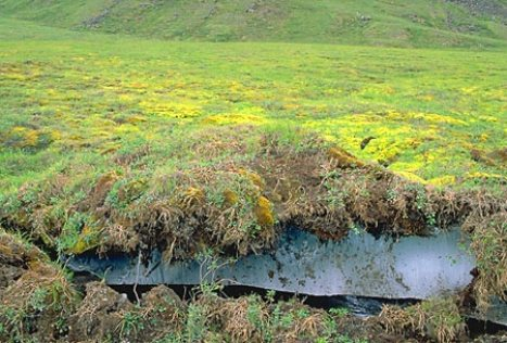how to stop permafrost melting
